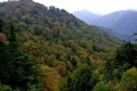 白山スーパー林道 石川県側 白山展望台から 標高1,350m ③