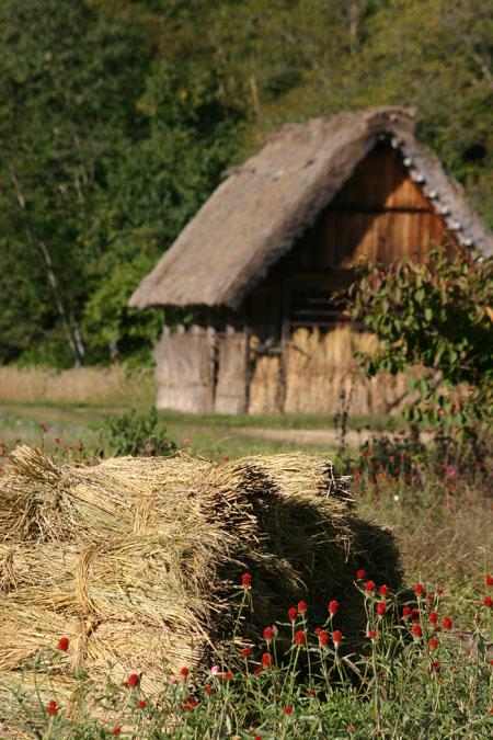 彩り鮮やか白川郷合掌造りの秋を満喫できる~⑨
