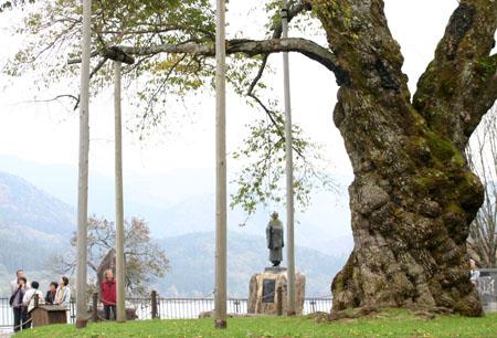 荘川桜 (御母衣ダム) 不可能といわれた移植を可能にし、見事咲き甦った奇跡の桜 ~ 秋の紅葉 ~ ⑩