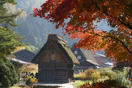 【紅葉】色鮮やかな空間につつまれる癒し旅~世界遺産 白川郷~⑦