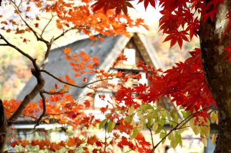 紅葉を眺めながら~ゆったりと散策を楽しもう~世界遺産 白川郷合掌集落 ②