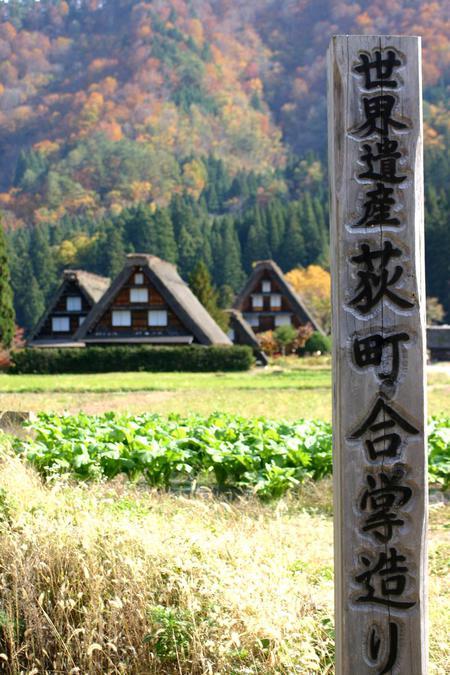 紅葉を眺めながら~ゆったりと散策を楽しもう~世界遺産 白川郷合掌集落 ⑥