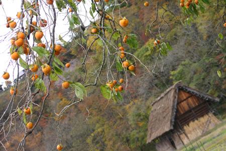 冬を迎える前に 美しく色づく白川郷の紅葉を楽しむ~o(^▽^)o ④