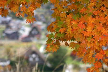 雪と紅葉が競演~世界遺産 白川郷合掌集落~ ⑦