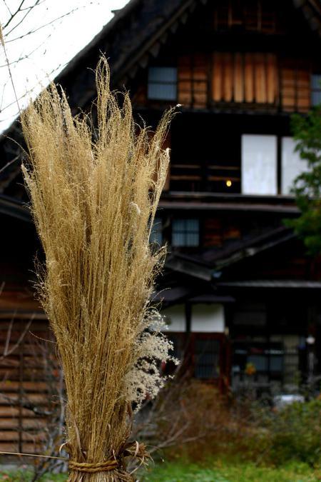 白川郷の山里はいよいよ紅葉シーズンも終盤♪色付いた紅葉も冬支度へと移り変わります! ②