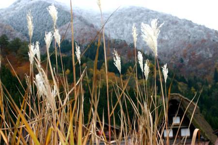 白川郷の山里はいよいよ紅葉シーズンも終盤♪色付いた紅葉も冬支度へと移り変わります! ④