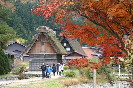 白川郷の山里はいよいよ紅葉シーズンも終盤♪色付いた紅葉も冬支度へと移り変わります! ⑥