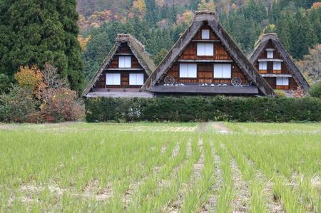 白川郷の山里はいよいよ紅葉シーズンも終盤♪色付いた紅葉も冬支度へと移り変わります! ⑨