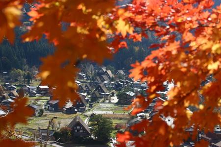 ★白川郷の秋~冬をゆっくり味わう◇紅葉、落葉、初霜、そして白い雪の世界へ――◇ ①