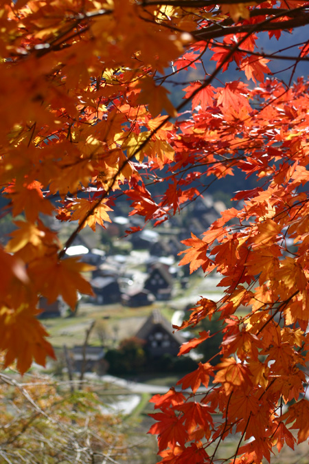 ★白川郷の秋~冬をゆっくり味わう◇紅葉、落葉、初霜、そして白い雪の世界へ――◇ ⑥