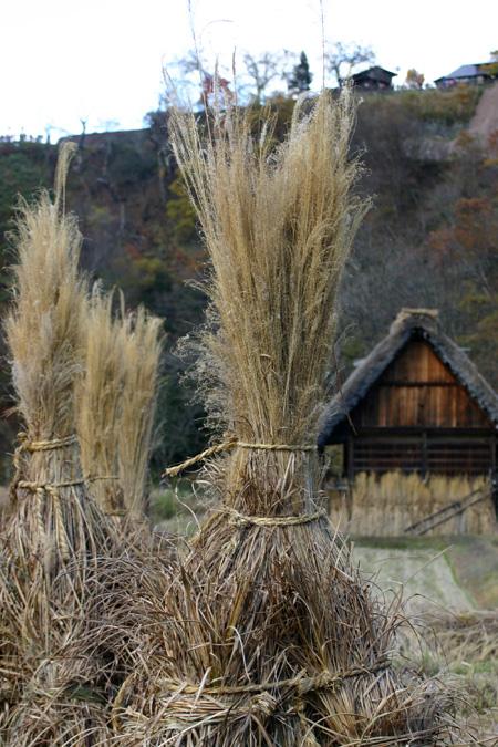 今年の紅葉は終盤に差し掛かっております!冬の準備が始まる世界遺産 白川郷合掌集落に是非 ⑥