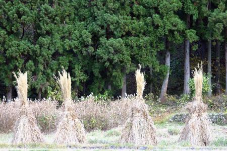 今年の紅葉は終盤に差し掛かっております!冬の準備が始まる世界遺産 白川郷合掌集落に是非 ⑦