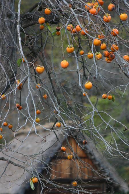 今年の紅葉は終盤に差し掛かっております!冬の準備が始まる世界遺産 白川郷合掌集落に是非 ⑧