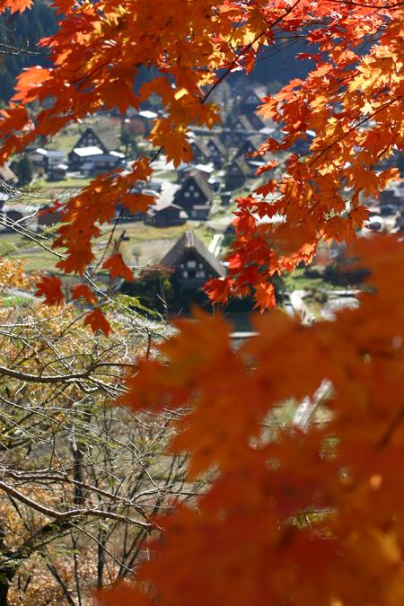 ~冬紅葉~紅葉の季節が終わりに近づき、もう冬の気配が漂い始める・・・世界遺産 白川郷 ②
