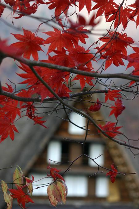 ~冬紅葉~紅葉の季節が終わりに近づき、もう冬の気配が漂い始める・・・世界遺産 白川郷 ⑦