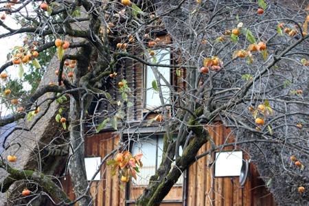 ~冬紅葉~紅葉の季節が終わりに近づき、もう冬の気配が漂い始める・・・世界遺産 白川郷 ⑨