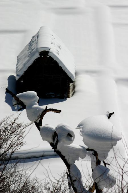 ~まもなく~白川郷合掌造りの素朴さをひときわ引き立たせる純白の雪 ②