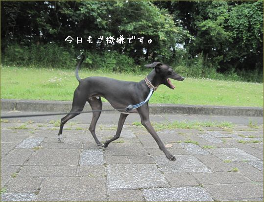 今度の日曜はお江戸に遊びに行くんです。