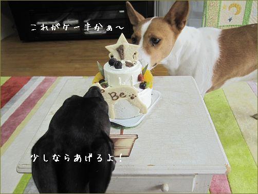高いから買えないわんこケーキ