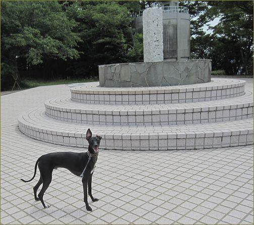 日本平てっぺんです。