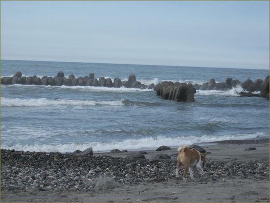 不気味なものがいっぱい打ちあがっていた浜。