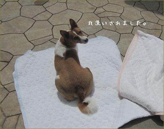 ついでに洗われた犬。