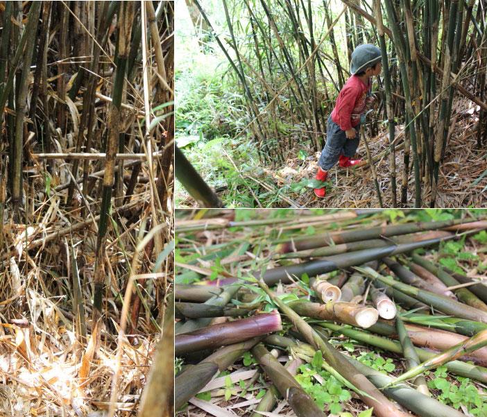 竹の子採り