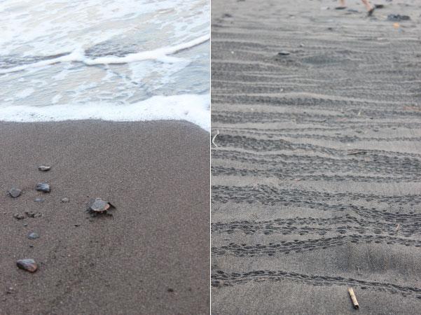 向江浜の海亀