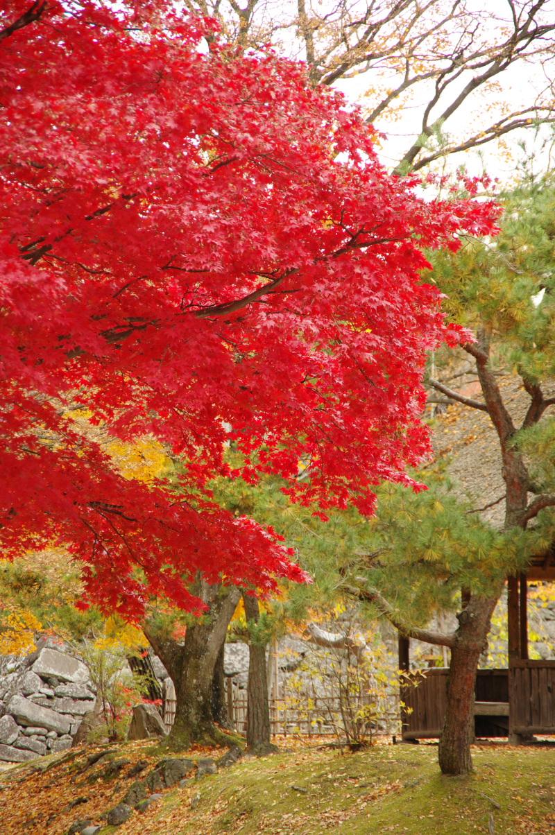 natsumachi1110-5.jpg