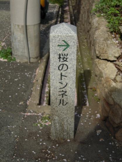 2013年 桜(桜のトンネル) (3)