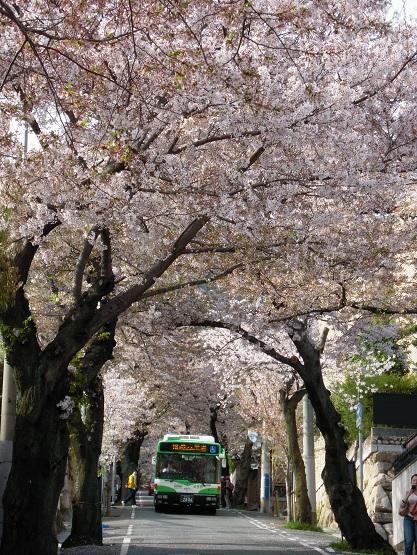 2013年 桜(桜のトンネル) (4)