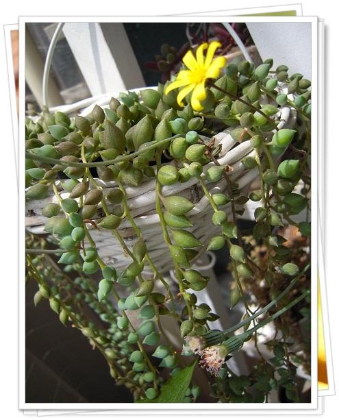 グリーン・ルビーネックレスのお花のコラボ