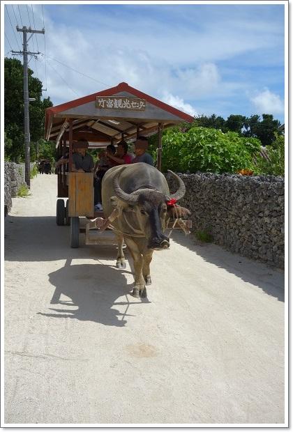 石垣島旅行(竹富島3)水牛車 2013・6月18日