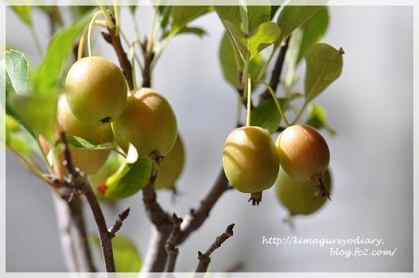 姫リンゴ (2)