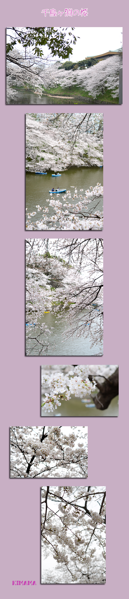 3月23日桜1