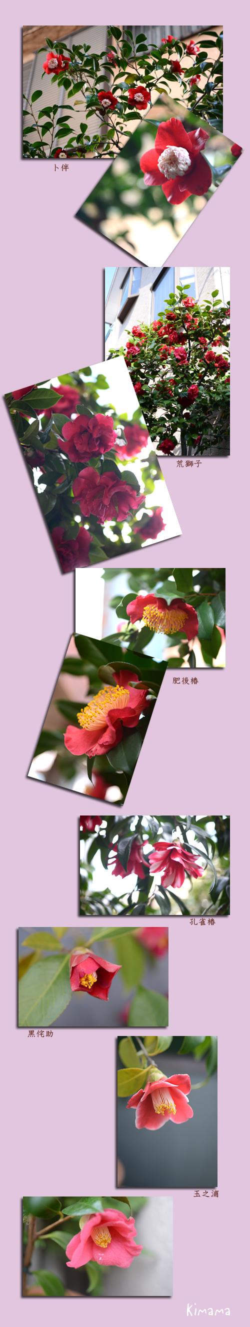 3月27日庭の花2