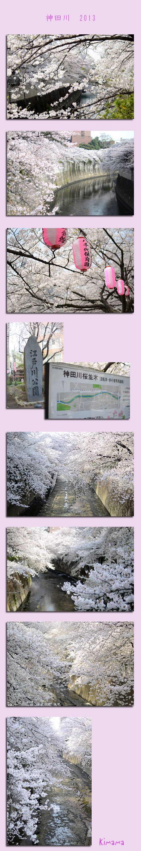 3月30日神田川1