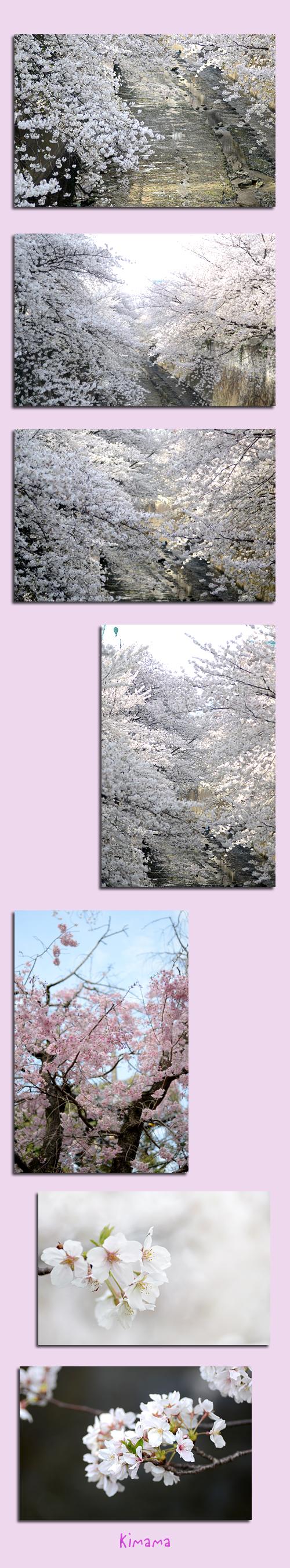 3月30日神田川2