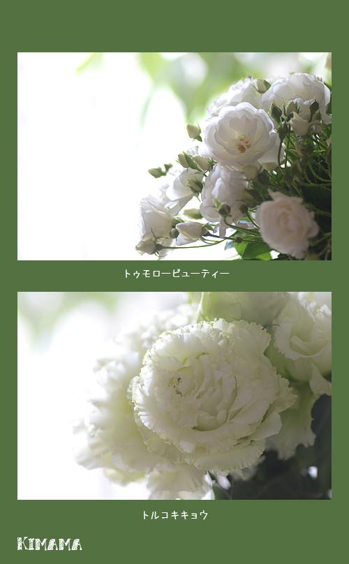 4月7日庭の花1