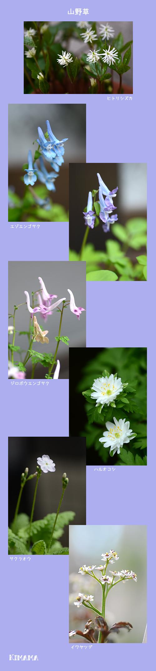 4月7日庭の花2
