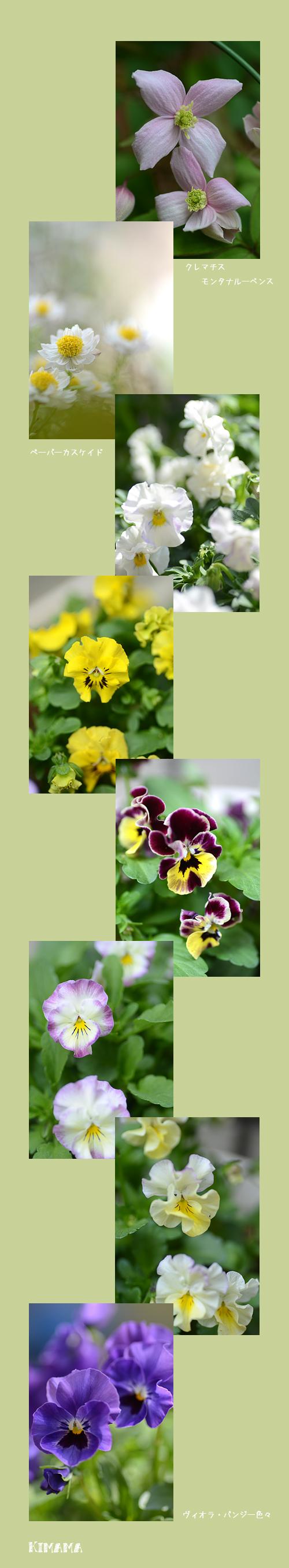 4月7日庭の花3