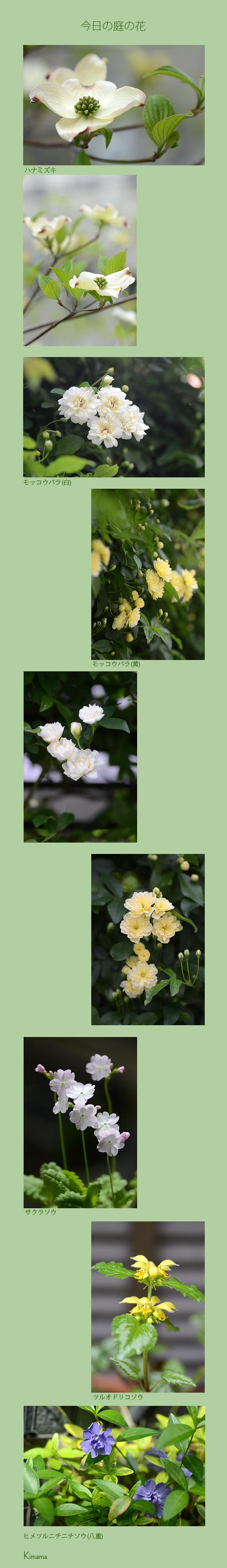 4月9日庭の花