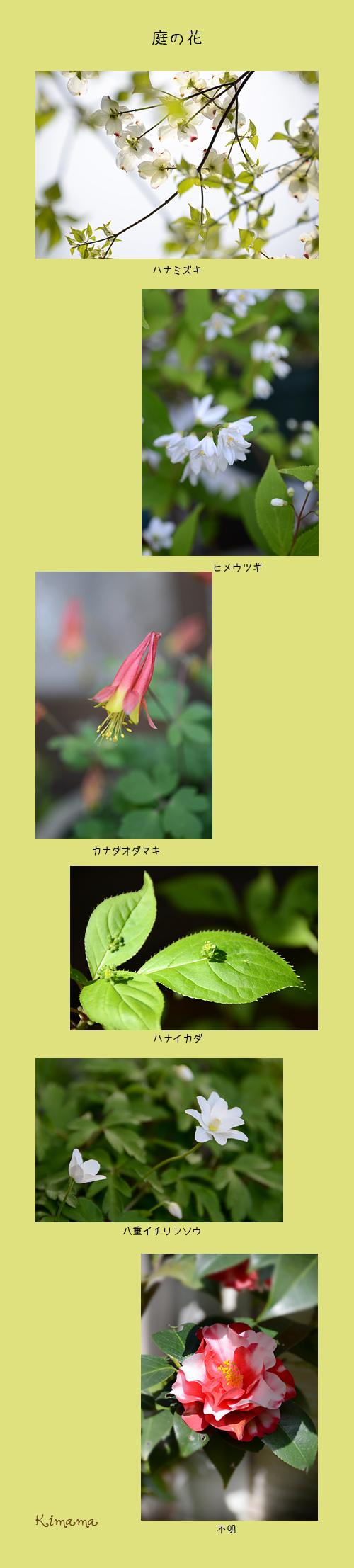 4月16日庭の花