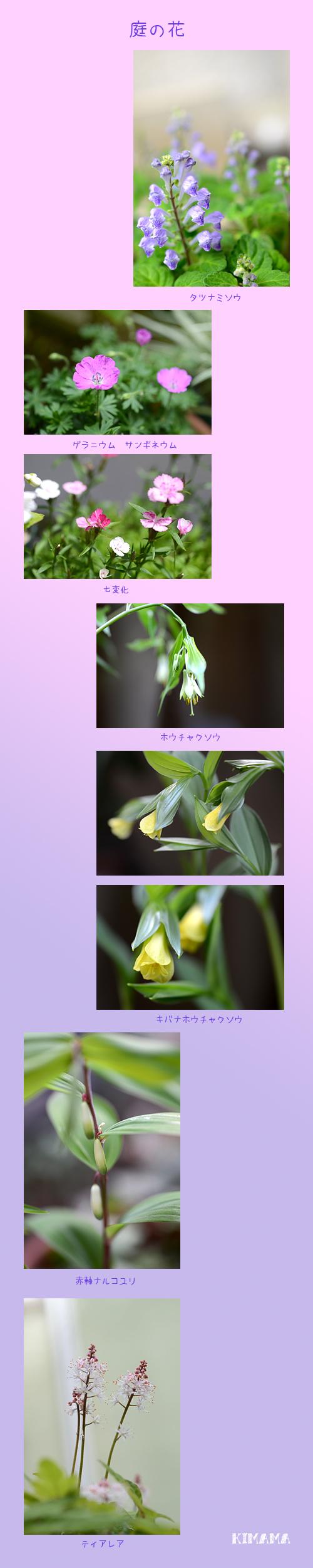 4月20日庭の花