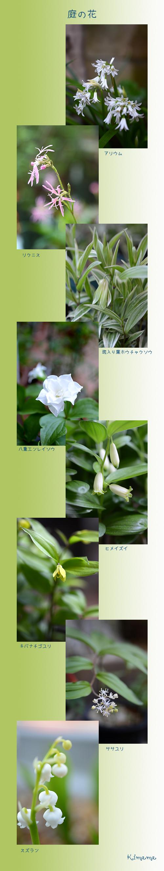 4月29日庭の花