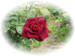 602薔薇2 ブログ