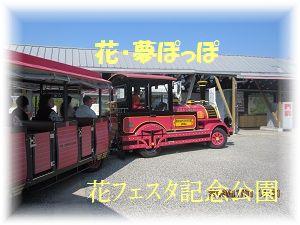 1101ぽぽ汽車 ブログ
