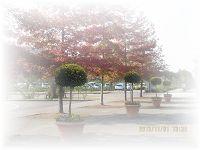1112 秋の風景 ブログ