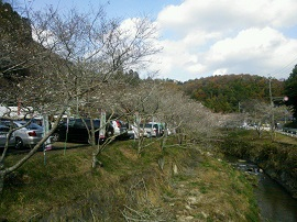 1121 四季桜1 ブログ