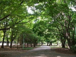 円山公園②